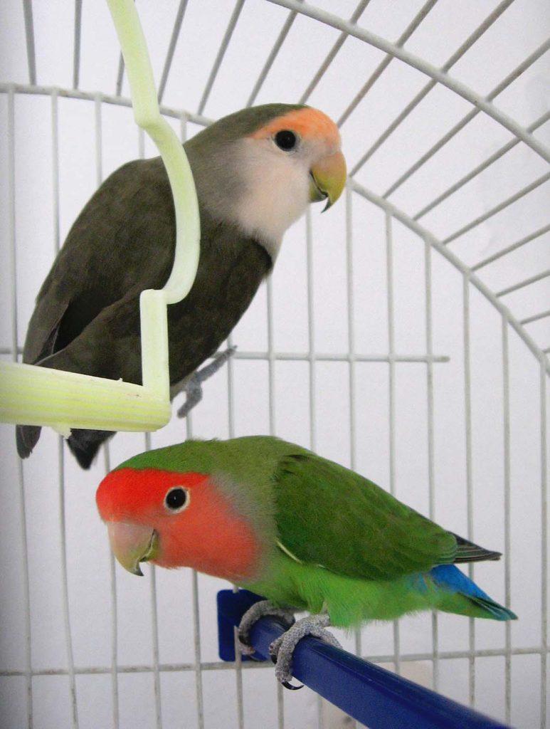 parrots-1391097